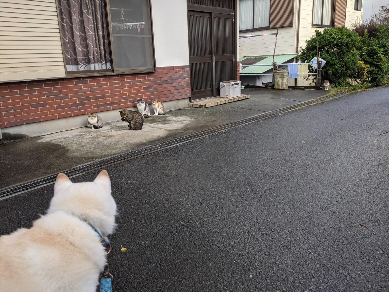ご近所を散歩中に猫集会に出会う